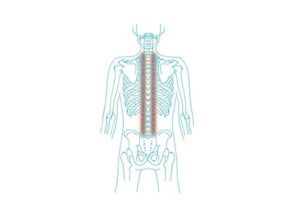 darstellung rückenmuskel